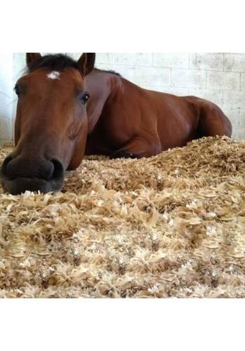 Ściółki dla koni w najlepszej ofercie